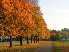 Yest another Autumn day in Uppsala by Betagalactosidase