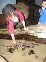 Touching Sharks by Tymuthus