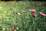 Wild Flowers At The Riverbank by shaneydarko
