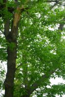 Tree Branch Leaves by Kaie13