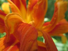 Fire Flower by Toderico