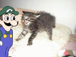 Weegee And 'WTF Cat' by 1Dimentiosuperfan1