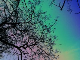 Branches in the colorful sky by ilonytestal1995
