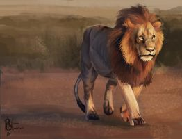 Lion Study by Kuvari