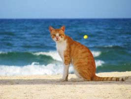 Its the cat...Tunisian cat by AneiKhaar