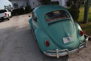 Florida Bugs by KyleAndTheClassics