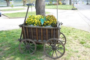 Potato Cart - Bacharach by Lauren-Lee
