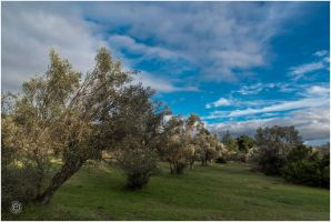 Tatoi 2015 00014a by etsap