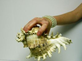 Shell in Hand Stock10 by D-is-for-Duck