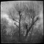 Trees 1578 by filmwaster