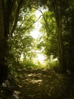 Premade Forest by desideriasp-stock