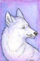 ACEO for Snowy-Ninja by Illusir