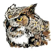 Great Horned Owl color by nash8808