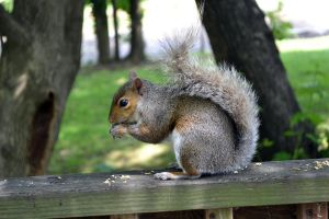 my new squirrel friend-two by beLIEveyourheart