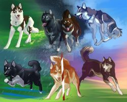Colorful Huskies by Sharaiza