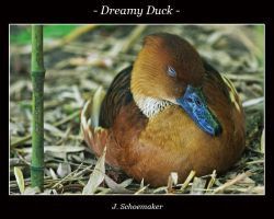 Dreamy Duck by Jna1985