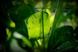 Pea Leaf 2 by EyeWonderUniverse