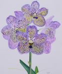 Watercolour Vanda Hybrid by Mararda