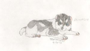 Black and White Husky Pup by HeartlessArt