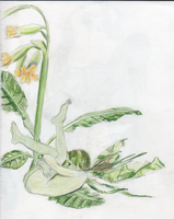 Cowslips by Lady-Tima