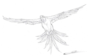 Parrot sketch by w0lfb0i