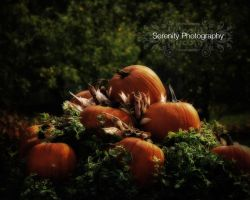Celebration of Harvest Wallpap by Serenityfhotography