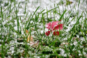 First Snow by sudd