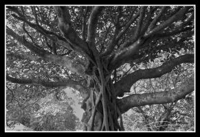 Arbol by Chichimalpopoca