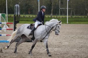 Grey Horse - Show jumping stock MHS 1.8 by MagicLecktra