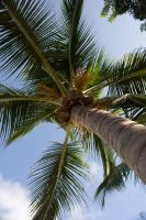 Palm by MillerTime30