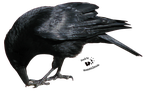 Cut-out stock PNG 60 - eating crow by Momotte2stocks