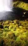 Freedom and its owner by alexandre-deschaumes