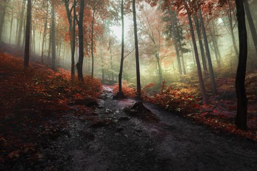 the forest of my dreams II by JoannaRzeznikowska