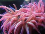 Tentacles of the Anemone II by Canislupuscorax