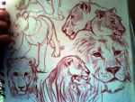 Lions by starsweep