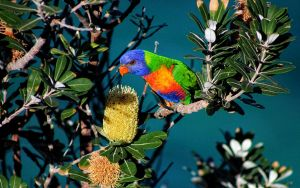 The Byron files - Rainbow Lorikeet by CouchyCreature