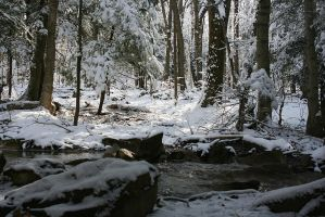 A Play of Light and Shadow In Wintertime by hollysfollys