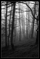 The Haunted Forest by VelesPhotos
