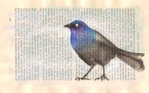 Blackbird with a little blue by tpants
