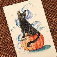 301- Black Cat by Lucky978