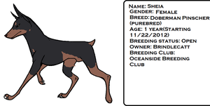 Sheia Reference - Want to breed? Comment! by brindlecatt