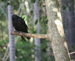 Crow in Tree3_Mind-Matter by Mind-Matter