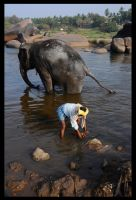 Elephant in Hampi being washed by yanjin