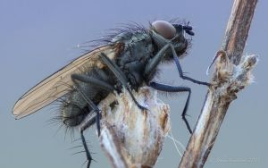 The fly by photojrs