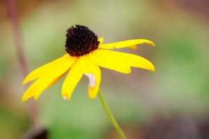 A Yellow Flower by foreverCTY