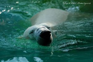 Enjoy to swim by MorganeS-Photographe