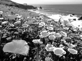 Flowes by the sea by DodO4