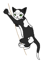 SkyClan - Patchfoot by WildpathOfShadowClan