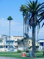 Newport Beach X by TrashyDiamond