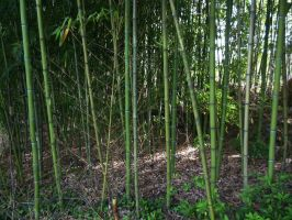 Bamboo 2 by AlissaDStock